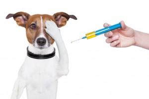 foto-pagina-10-jn-vacinacao